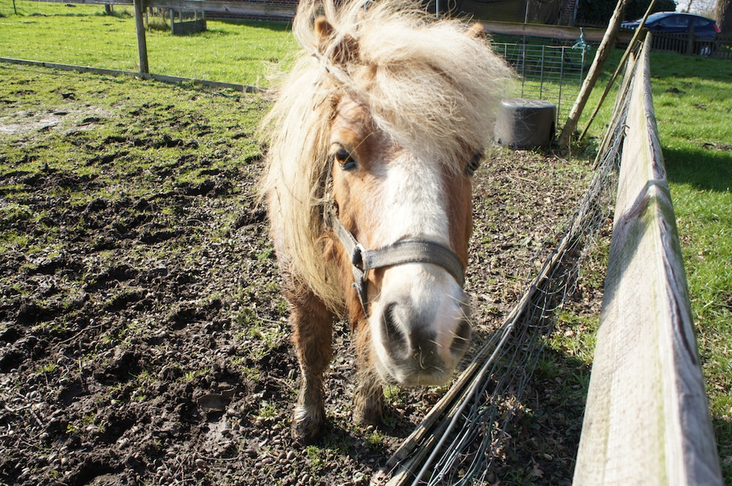 """Pony """"Speedy"""""""