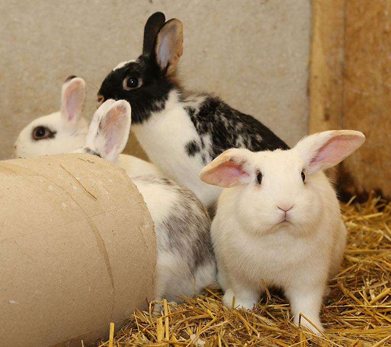 Kaninchen auf dem Hof Schwienhorst